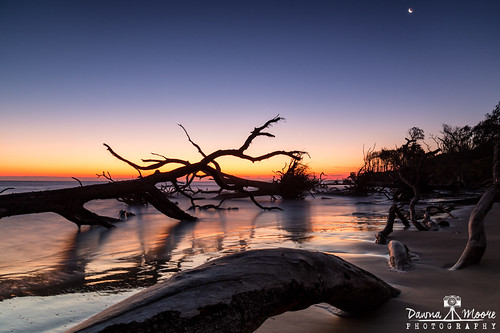 bigtalbotislandstatepark blackrocktrail blue fl florida floridastatepark photography sunset barrierisland beach beacherosion bigtalbotisland blackrock blackrockbeach boneyardbeach coastline crescentmoon dawnamoorephotography dawnamoorephotographycom deadtree driftwood driftwoodbeach erosion image jacksonville lowtide ocean orange photo photograph picture purple sunrise talbotisland travel tree trees unitedstates usa yellow us