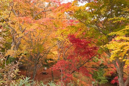 【写真】2012 紅葉 : 笠置山もみじ公園/2020-05-28/IMGP6142