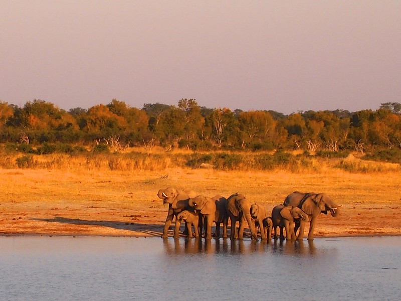 Hwange National Park, Zimbabwe - Version 2