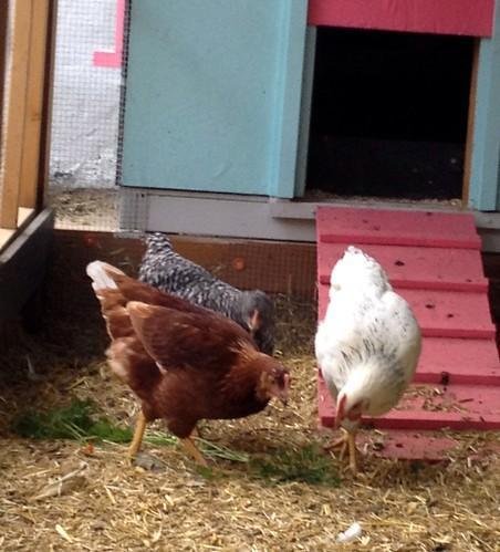Ladies enjoying carrot greens from the garden