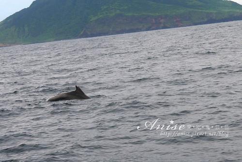 宜蘭賞鯨_027.jpg