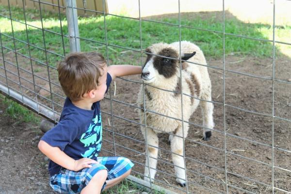 Petting Zoo, 11
