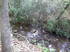Big Tree Park 042413