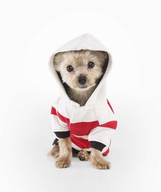 Ralph Lauren Striped Fleece Dog Hoodie