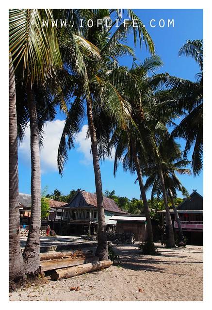jejeran pohon kelapa pantai liukang