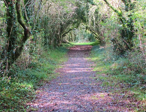 ireland light shadow tree beautiful landscape leaf arch view path cork branches tunnel litter foliage shade treetunnel thegearagh ilobsterit