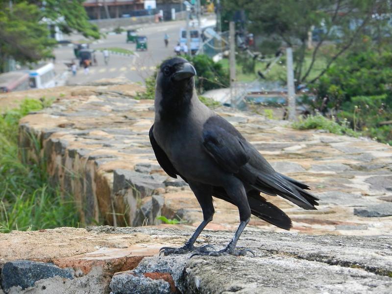 В форте Галле, Шри Ланка