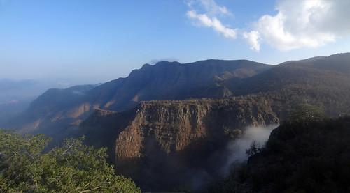 panorama nature day du vegetation francois françois forêt flore afrique djibouti maisondugouverneur afriquedelest françoistofs