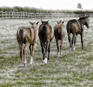 Retreat from the Tourists, National Stud, Newmarket, UK 2