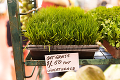 flower(0.0), food(0.0), lawn(0.0), grass(1.0), plant(1.0), wheatgrass(1.0), herb(1.0), green(1.0), produce(1.0),
