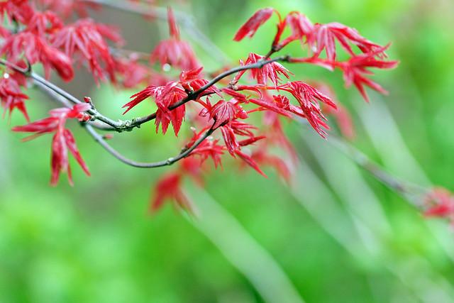 写真_New Leaves2
