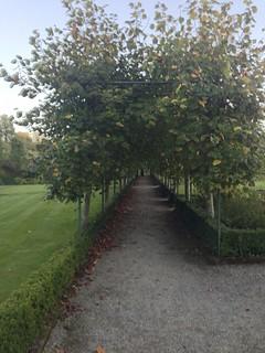Arbor, Dromoland Castle