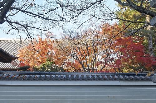 【写真】2013 紅葉 : 妙顕寺/2020-11-01/IMGP4150