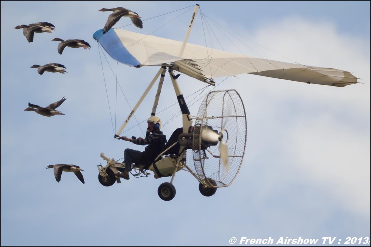 Vol avec les oies