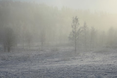 fog, winter, haze, frost, forest, morning, winter storm, freezing, mist,