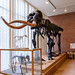 Mastodon On Display