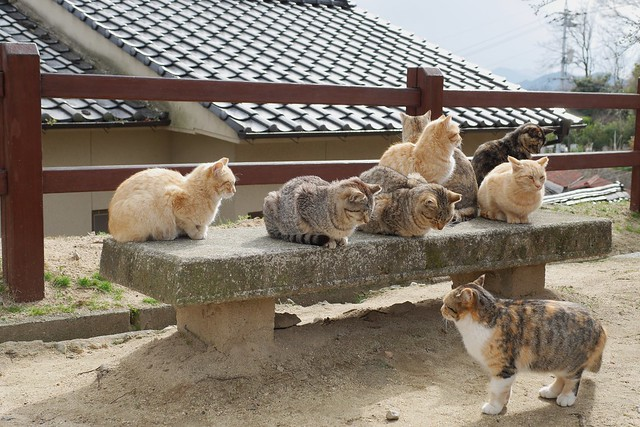 cat summit 2014 in Onomichi