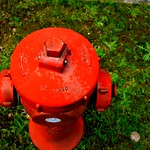 The park - fire hydrant