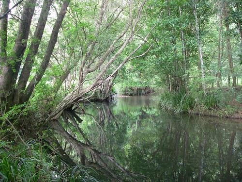 Lansdowne River at Paynes Lane, Upper Lansdowne NSW