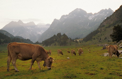 pyrenees spain mammal
