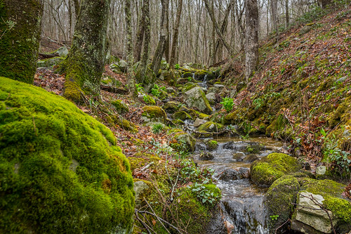 spring rhodeisland arcadia stream brook moss forest woods water