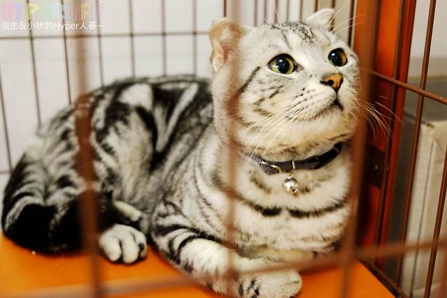 咕嚕貓咖啡旗艦館 (3)