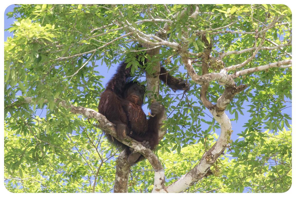 Borneo-20170411-IMG_7572