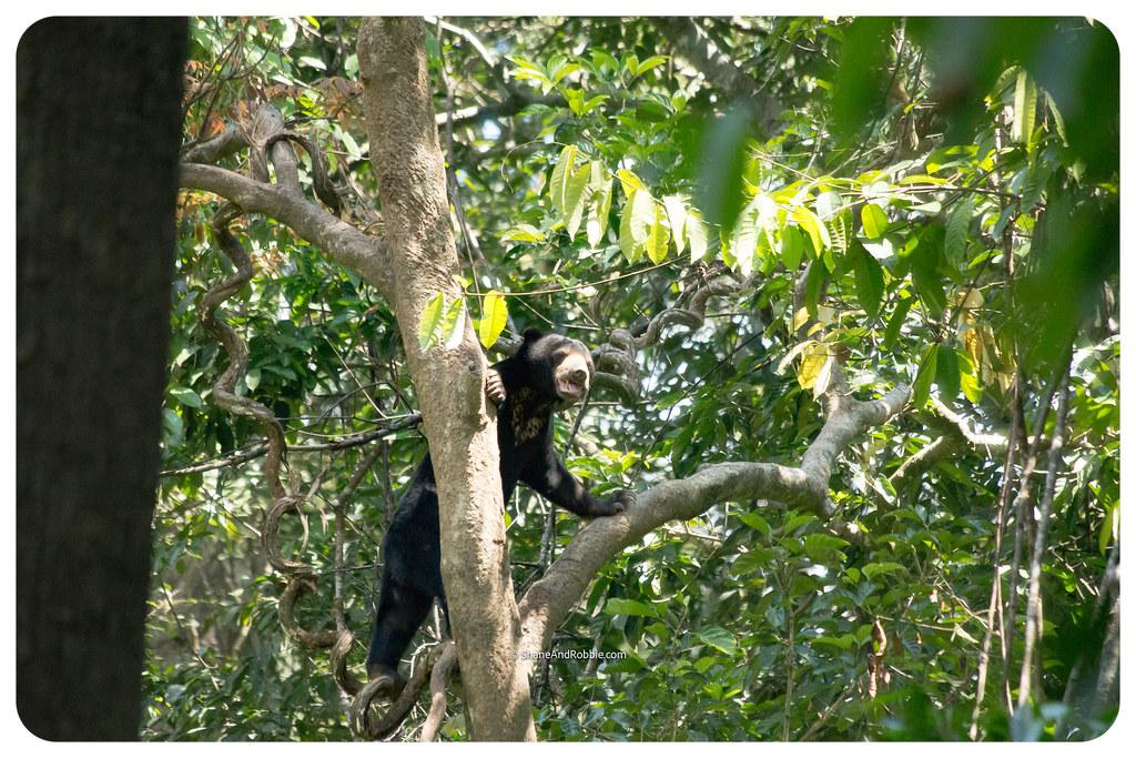 Borneo-20170413-IMG_8172