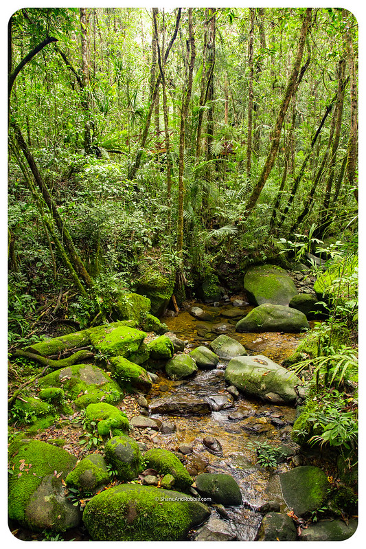 Borneo-20170409-IMG_7146