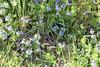 Wild Flowers 30.04 (5)