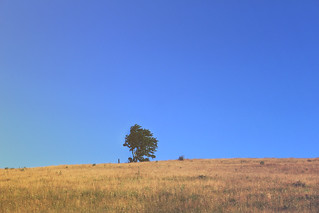A Lonely Little Tree