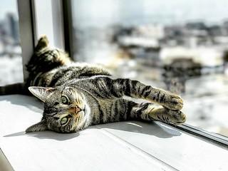 #timberthecat chillin #sun #resting #cat #cats #cat😺 #catsagram #timber