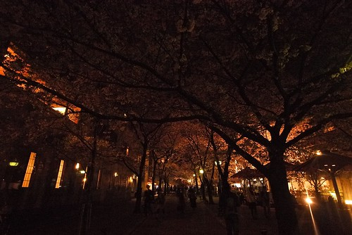 衹園白川 - another popular place for sakura viewing at night - so lovely~~~