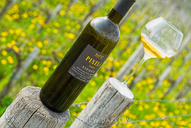 Batic Estate Pinela Vipava (Orange Wine), In The Vineyard