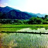 Rice paddies & mountains, Yamagata prefecture, Japan