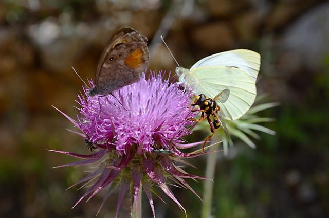 Mljet National Park, Croatia, bugs and butterflies