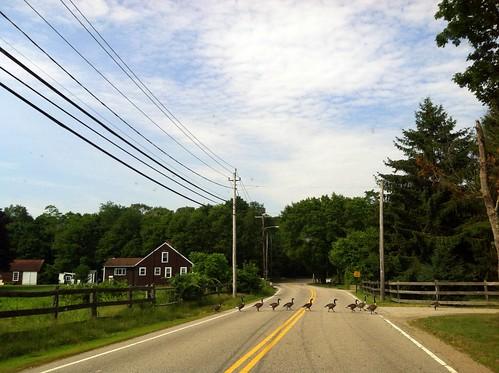 [87/365] Geese Crossing by goaliej54