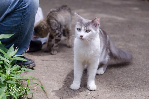 川越 貓咪5
