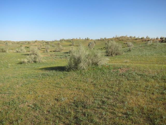 Зеленая пустыня