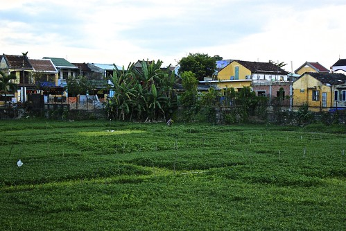 A huge garden right in the middle of Hoi An