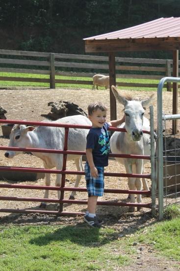 Petting Zoo, 3