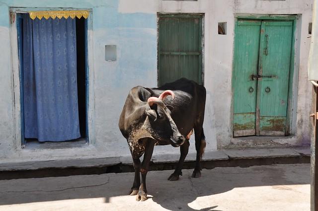 India_Trip_518