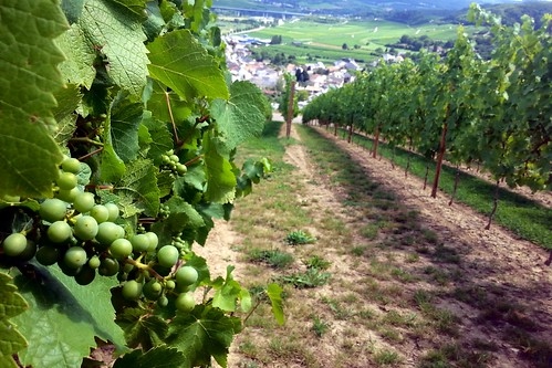 Schengen Vineyards