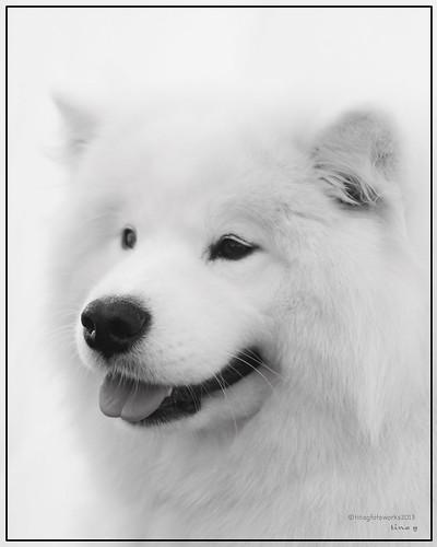 WINDSOR DOG SHOW 2013