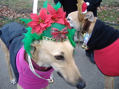 12-09-07 Jingle Bell Walk