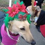 12-09-07 Jingle Bell Walk