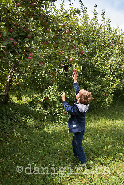 family photographs in the apple orchard Ottawa