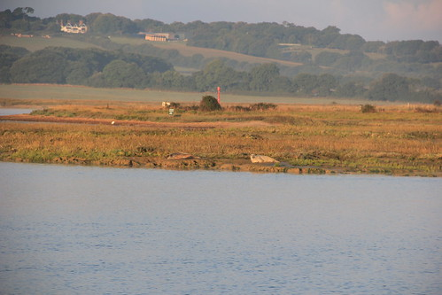Seals at Newtown Creek