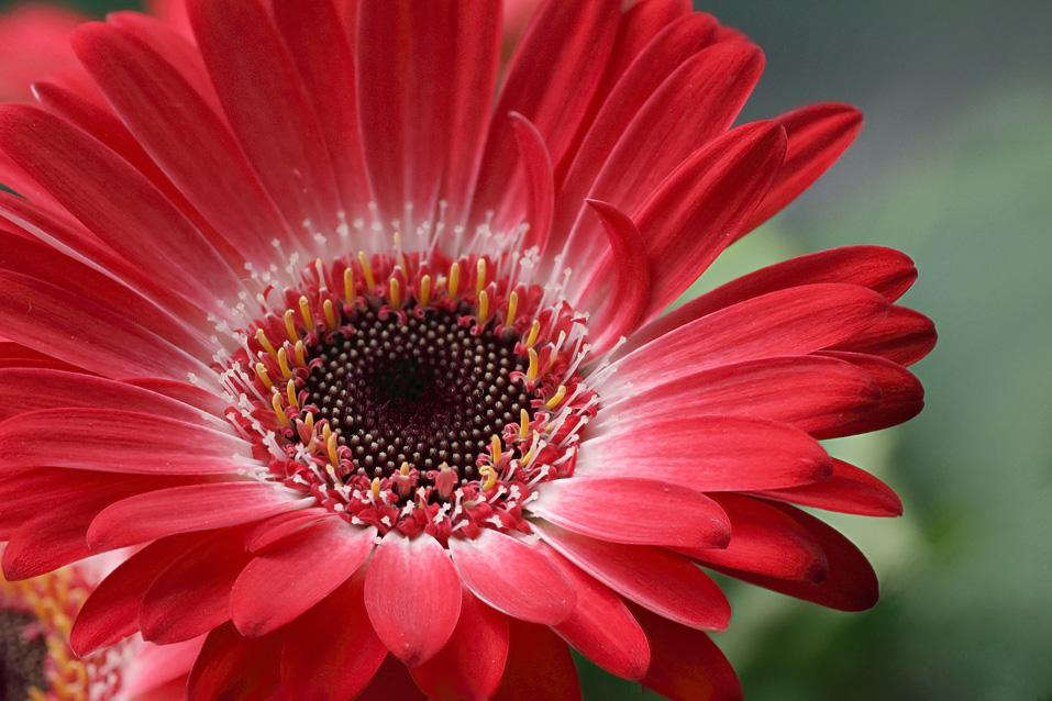 IMAGE: http://farm3.staticflickr.com/2863/9796156186_839e81e718_o.jpg