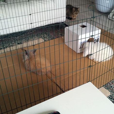 my baby angora bunnies
